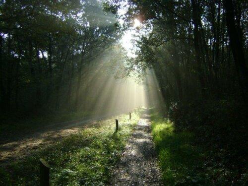 Wandelen en of fietsen in het Drents Friese Wold