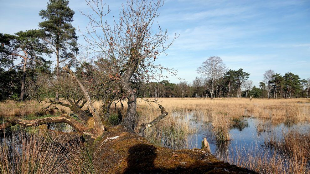 Natuur Drenthe