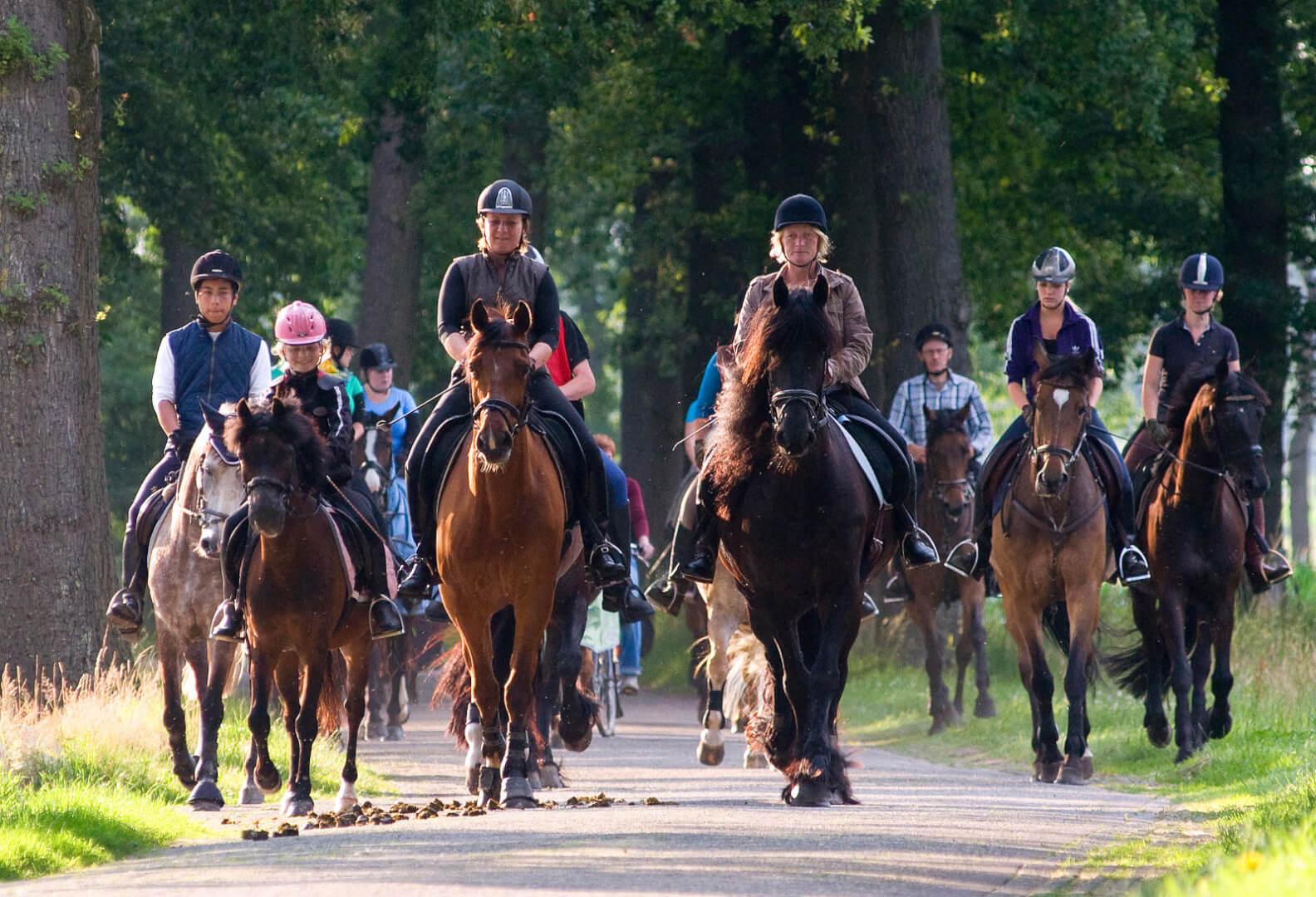Paarden vierdaagse Zorgvlied