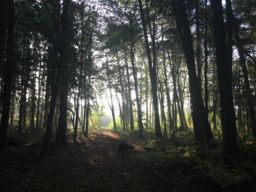 Bos voor Camping Zonnekamp