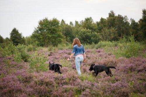 Wandelen met de honden over de hei Camping Zonnekamp