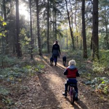 Wandelvakantie Drenthe camping in Drenthe Camping Zonnekamp