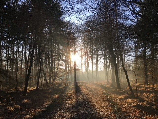 Zon schijnt door de bomen Camping Zonnekamp