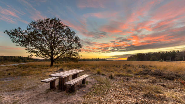 Drents Friese Wold Camping Zonnekamp